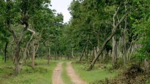 Bandipur – Habitat