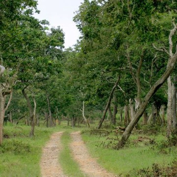 A Quick Trip to the Bandipura Forests
