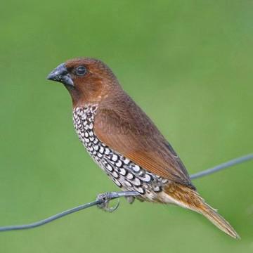 Land of the Finch Bills – Ramapura Lake and the Surrounding Habitats