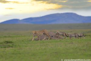 Cheetah Scape