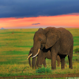 Journey to Kenya's Wonderlands